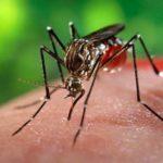 Ayurvedic Medicines For Dengue Fever
