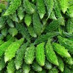 Karela For Diabetes